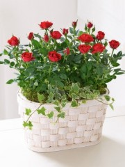 Red Rose Basket